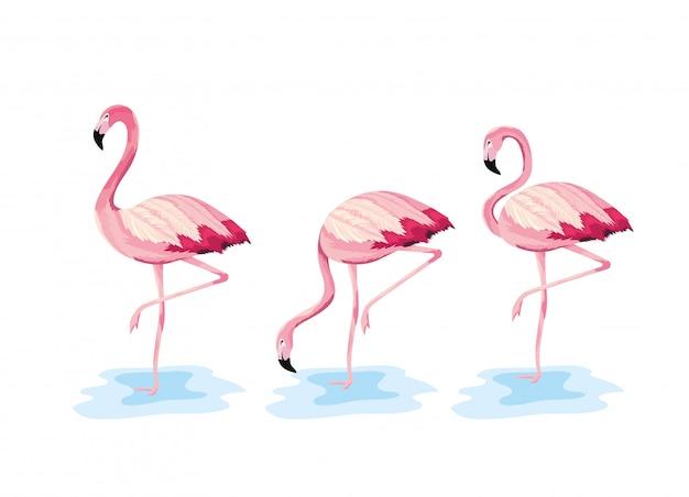 Conjunto de animais selvagens flamengos tropicais