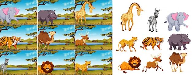 Conjunto de animais selvagens na natureza