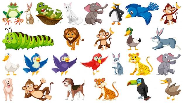 Conjunto de animal fofo