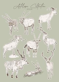 Conjunto de antílopes, esboço desenhado de mão de animais