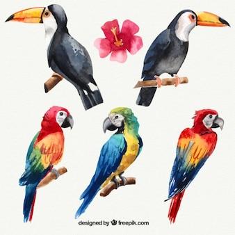 Conjunto de aquarela aves tropicais