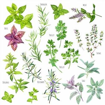 Conjunto de aquarela cozinhar ervas, cozinha mediterrânea