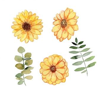 Conjunto de aquarela de flor margarida