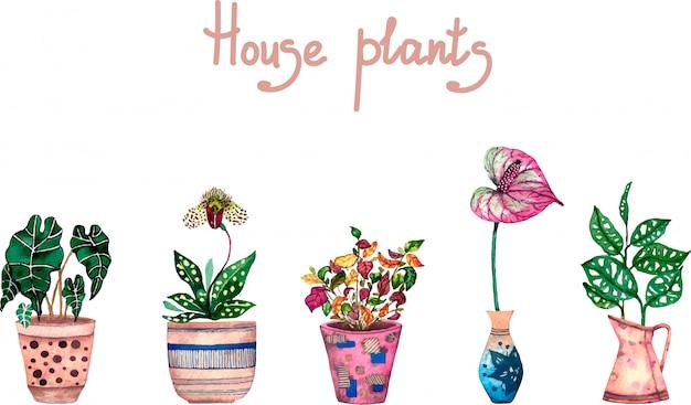 Conjunto de aquarela de plantas de casa
