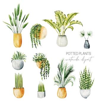 Conjunto de aquarela em vasos de plantas para casa, coleção de plantas isoladas, ilustrações desenhadas à mão