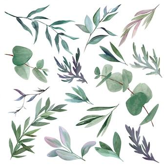 Conjunto de aquarela folhas e galhos, vegetação desenhada de mão
