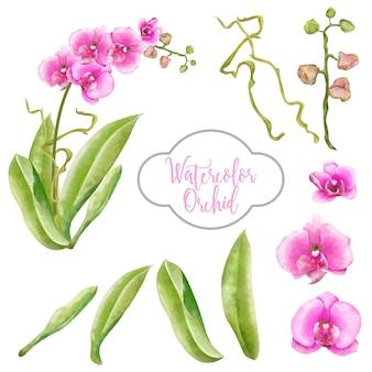 Conjunto de aquarela orquídea rosa