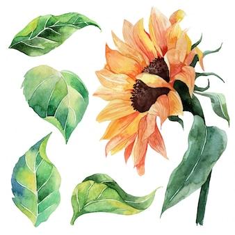 Conjunto de aquarela pintada à mão de girassol e folhas