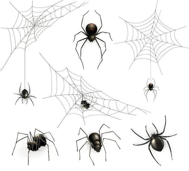 Conjunto de aranhas e teia de aranha