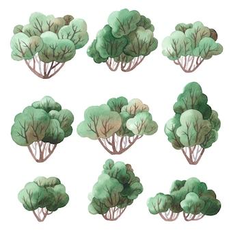 Conjunto de arbustos.