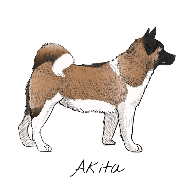 Conjunto de arte de ilustração de animais