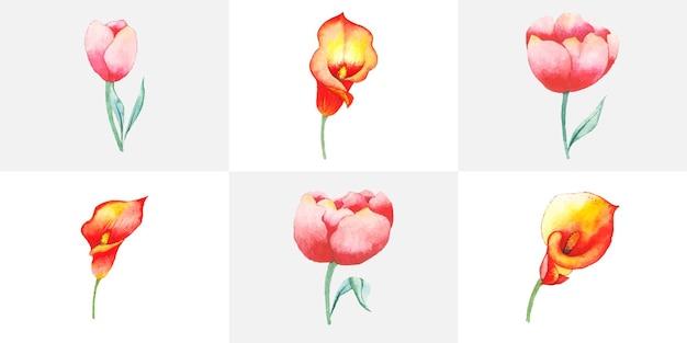 Conjunto de arte floral aquarela desenhada à mão