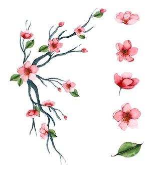 Conjunto de arte floral aquarela desenhado à mão