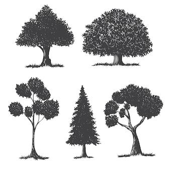 Conjunto de árvore desenhada de mão