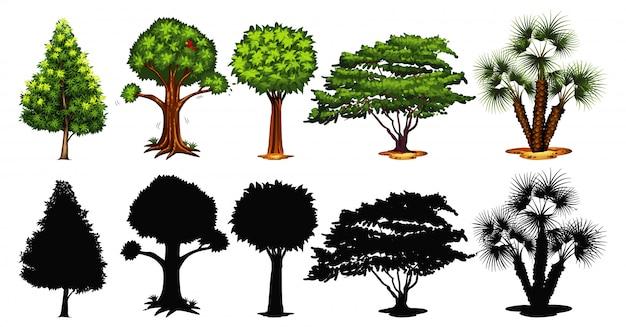 Conjunto de árvore e sombra