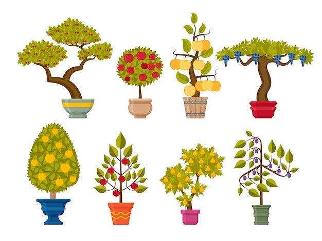 Conjunto de árvores de bonsai. plantas decorativas em vasos de flores
