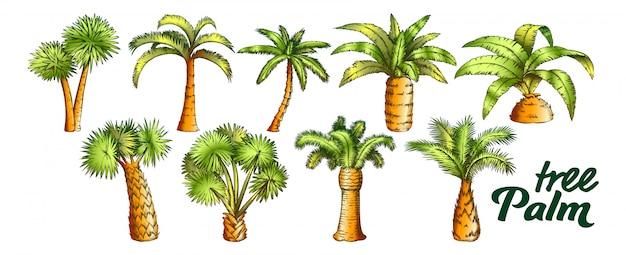 Conjunto de árvores de tronco alto e pequeno de palma