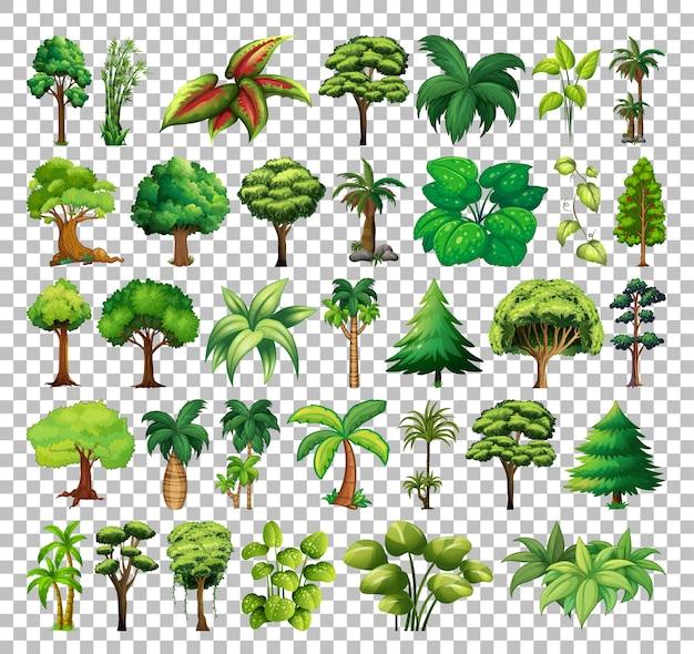 Conjunto de árvores em fundo transparente