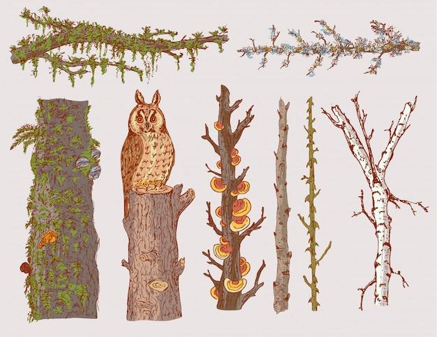 Conjunto de árvores florestais desenhadas à mão
