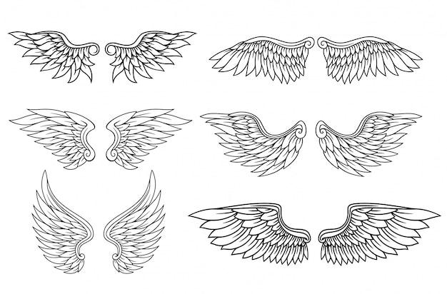 Conjunto de asas de águia ou anjo