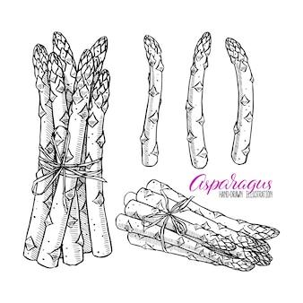 Conjunto de aspargos maduros. ilustração desenhada à mão