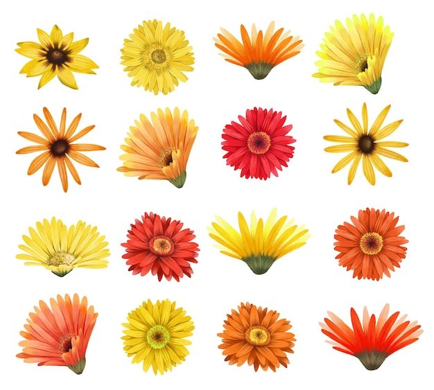 Conjunto de ásteres vermelhos e amarelos e botões de flores gerber