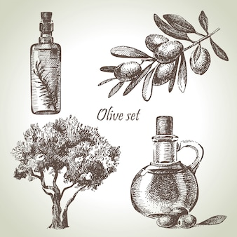 Conjunto de azeitona desenhada de mão