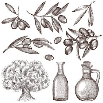 Conjunto de azeitonas, óleos, oliveiras, ramos de oliveira.
