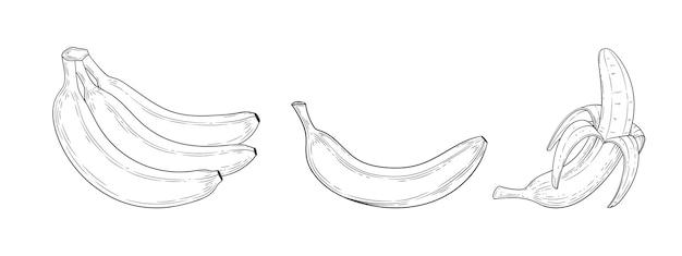 Conjunto de banana gravado com ilustração vintage de folha isolada no fundo branco. esboço desenhado de mão de alimentos orgânicos. contorno preto.