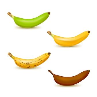Conjunto de bananas de cores diferentes, de verdes a maduras