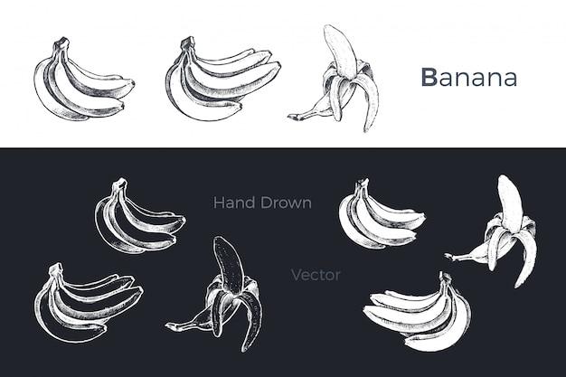 Conjunto de bananas mão desenhada