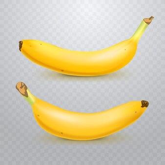 Conjunto de bananas realistas em transparente quadriculado