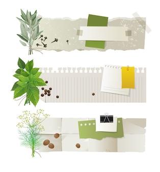 Conjunto de banner de ervas