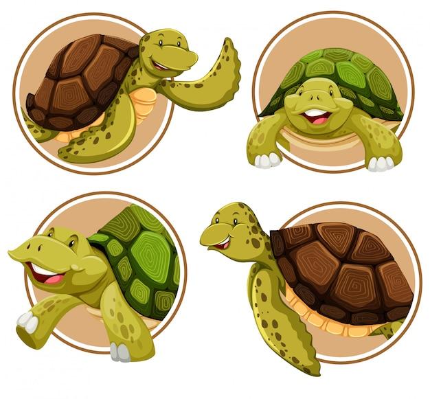Conjunto de banner de tartaruga