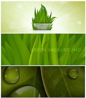 Conjunto de banner natural para design de cartaz.
