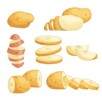 Conjunto de batatas de desenho animado. inteiro, fatiado, descascado. fatias voadoras. cultive vegetais frescos. melhor para o mercado, pacotes. coleção de ilustrações. sobre fundo branco.