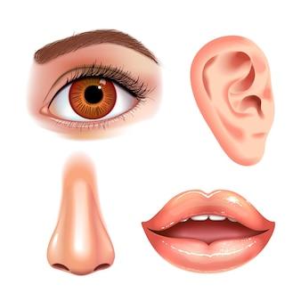 Conjunto de belos olhos femininos, nariz, orelha e boca brilhante com lábios brilhantes.
