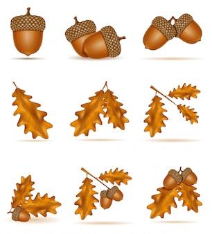 Conjunto de bolotas de carvalho com folhas ilustração vetorial