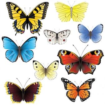 Conjunto de borboleta