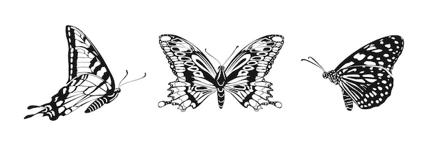 Conjunto de borboletas. borboleta monarca.