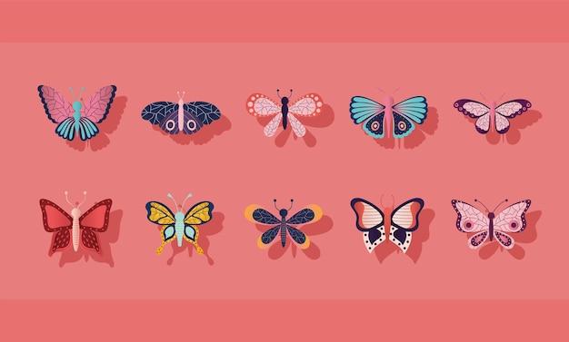 Conjunto de borboletas em um fundo rosa