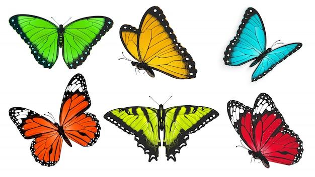 Conjunto de borboletas realistas, brilhantes e coloridas, ilustração de borboleta