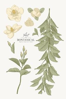 Conjunto de botânica de esboço. desenhos de folha e flor de magnólia. bela linha artística. ilustrações