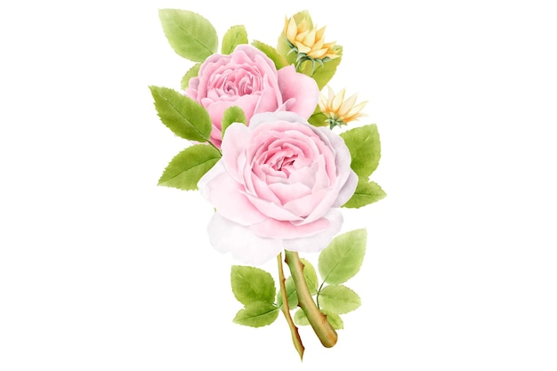 Conjunto de buquês de rosas em aquarela desenhados à mão