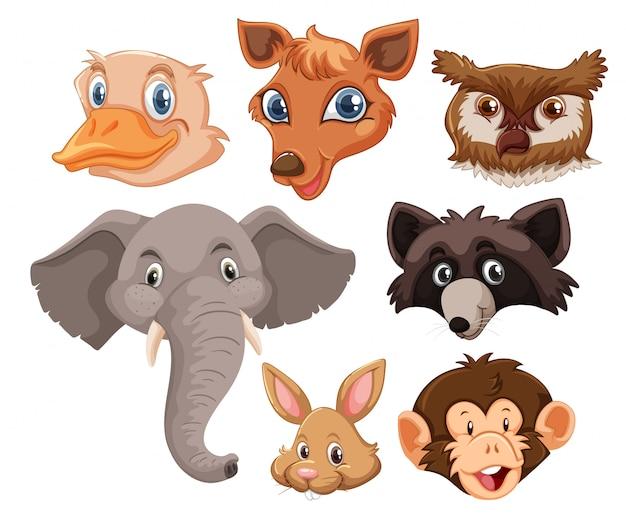 Conjunto de cabeça de animais selvagens