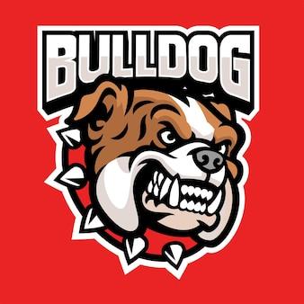 Conjunto de cabeça de mascote esportiva de bulldog zangado