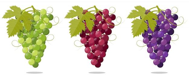 Conjunto de cacho de uvas frescas roxo branco e rosa