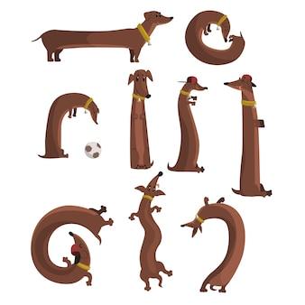 Conjunto de cachorro bassê, cachorro longo engraçado fofo em diferentes situações ilustrações vetoriais Vetor Premium