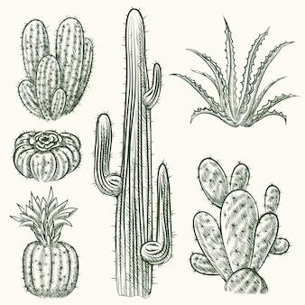 Conjunto de cacto desenhado à mão. planta mexicana, flora exótica