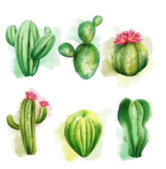 Conjunto de cactos. coleção de plantas exóticas. cacto com flor